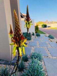 Sbahlescapes-projects-landscape-plants