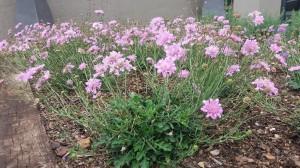 sbahlescapes-koch-project-plants-close-up